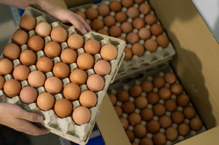 Fedeagro: Producción de huevos pasó de 1,5 millones a 250 mil cajas