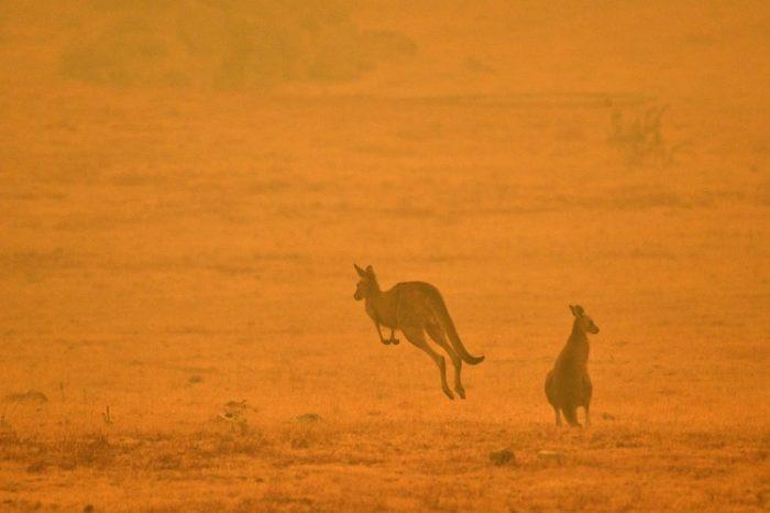 ¡El momento más triste! Estas son las especies que desaparecerán en Australia
