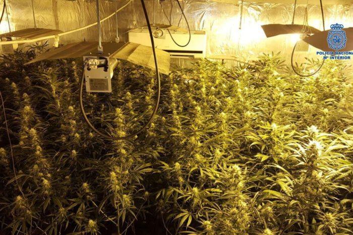 25 toneladas incautadas y cerca de 3.700 detenidos convierte a España en el mayor centro productivo de cannabis en Europa
