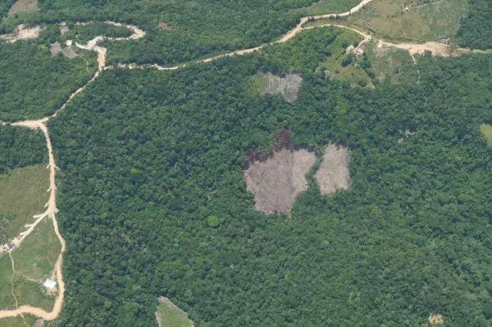 Las devastadoras consecuencias ecológicas del narcotráfico en Colombia luego de la paz de Santos